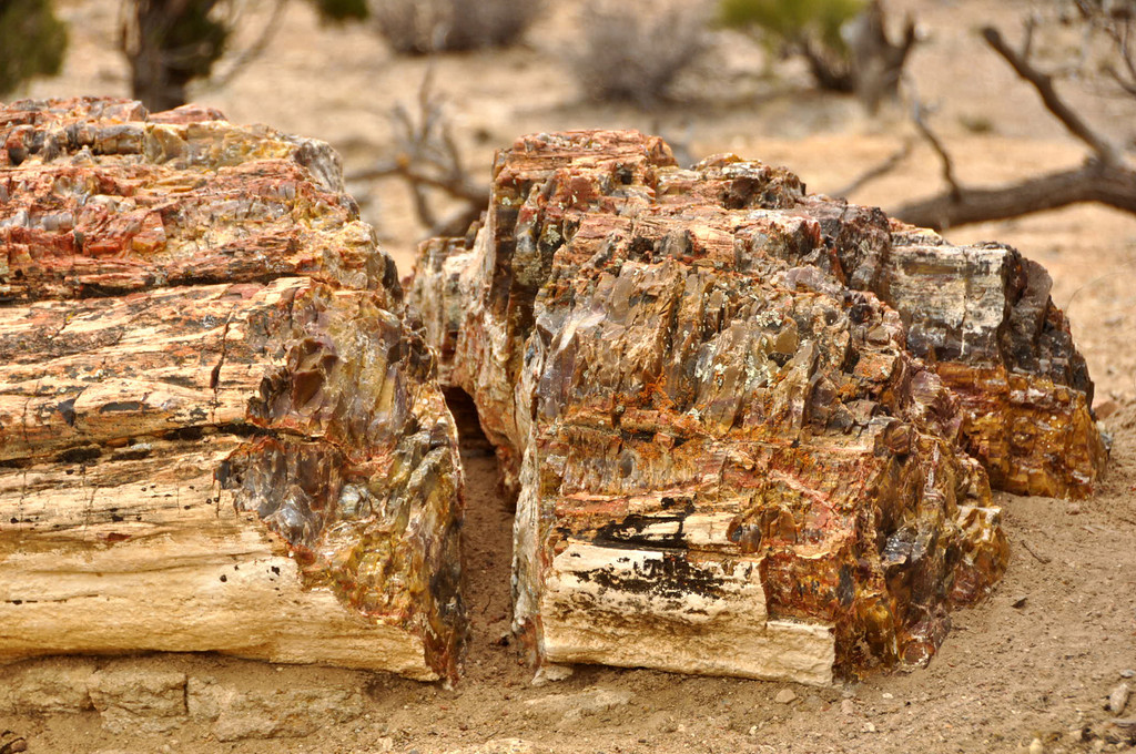 Petrified wood in the Petrified Forest, Escalante, Utah (Highway 12 East)