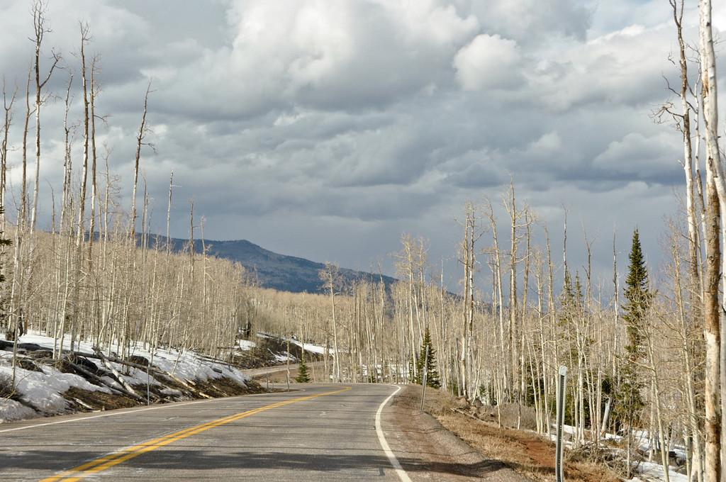 Dixi National Forest, Highway 12 East, Utah
